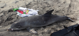 Photo by Marine Mammal Stranding Center