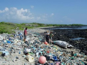 Plastic debris-Paddler's Planet by Christian Wagley-SUP Radio