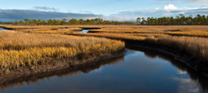 salt-marsh-at-carrabelle-2
